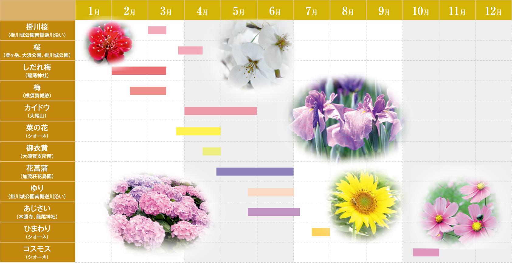掛川 四季の花暦